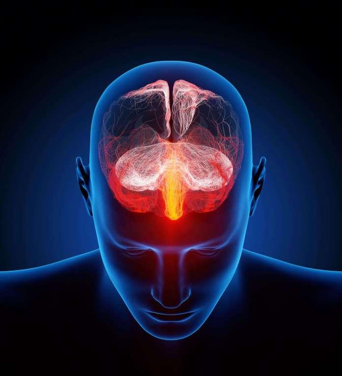 Human mini-brains