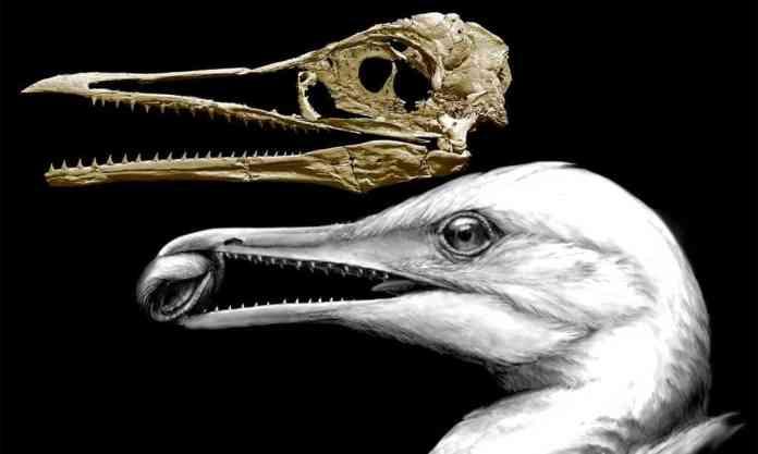 spinonews dinosaur teeth bird