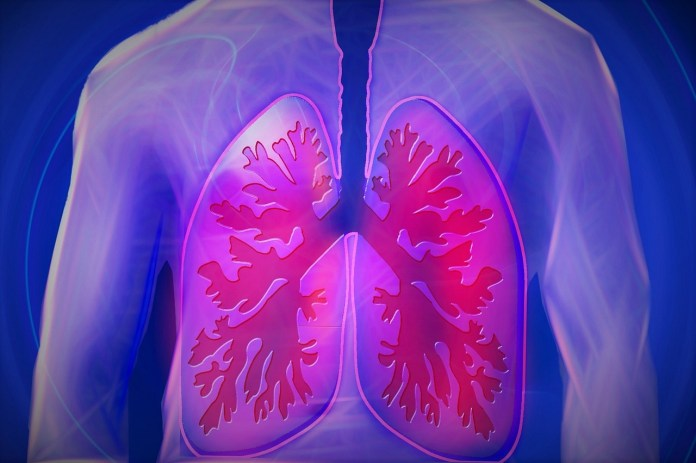 spinonews Healthy lungs