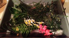 Foraged flowers, grasses and leaves...