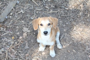 The puppy pictured has been so recently rescued he has not been given a name yet.