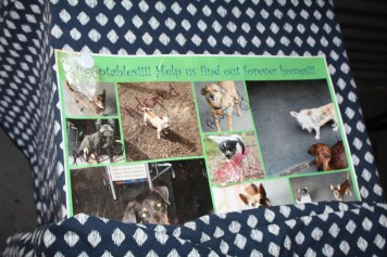 """The sign pictured above shows the many adoptions that have taken place at """"Chuckling Hound""""."""