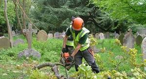tree surgery, topping felling and pruning