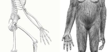 Cel mai vechi umanoid