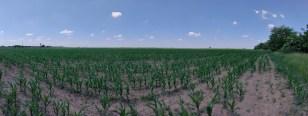 OnePlus Nord CE 5G_panoramic