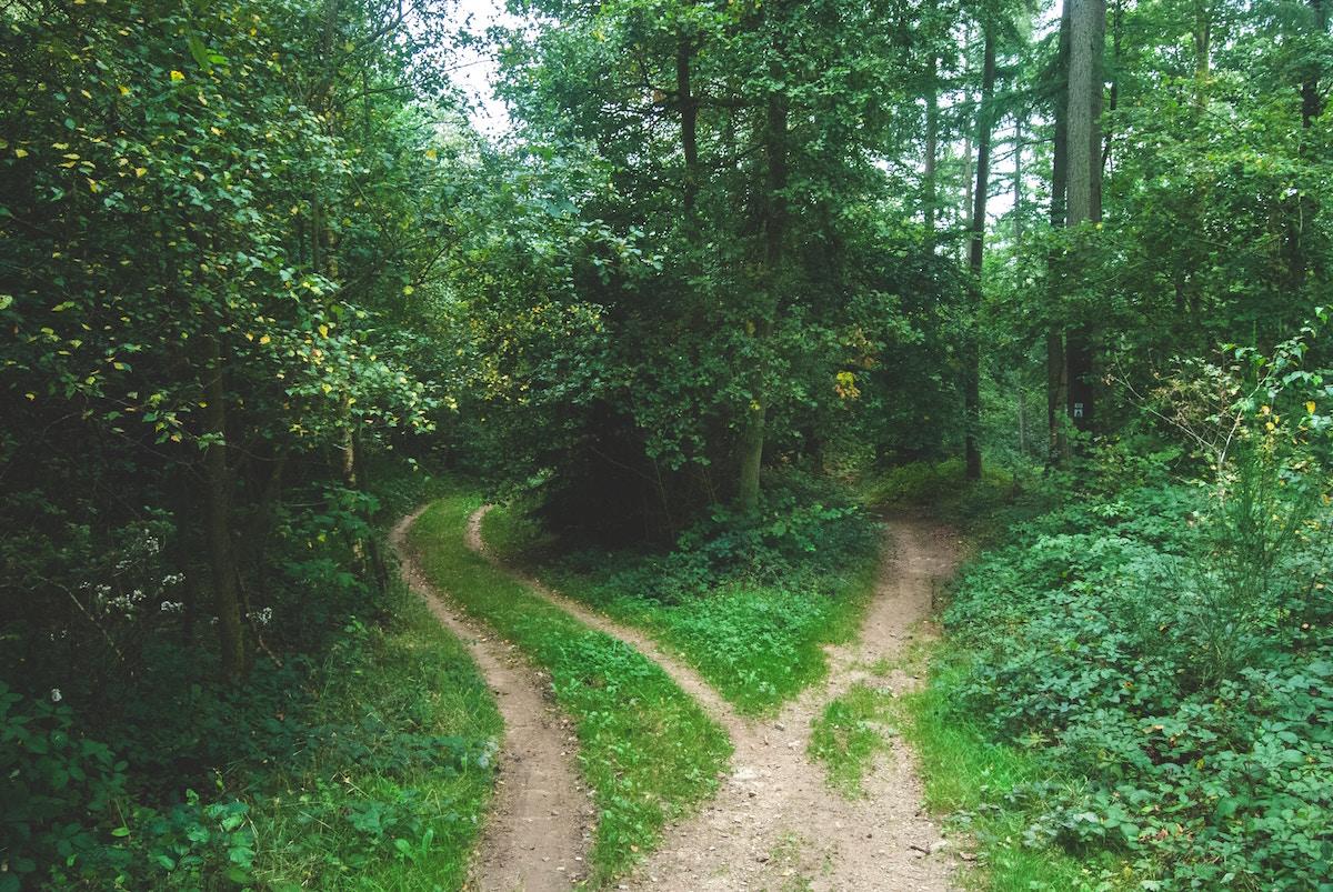 deciding on a path