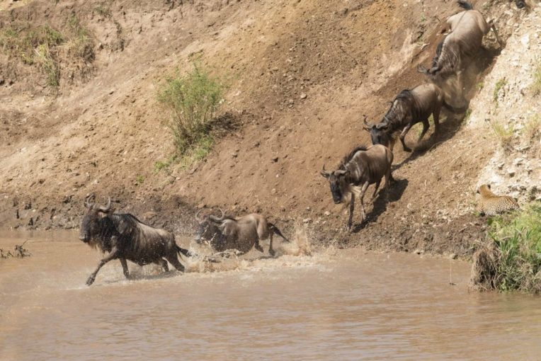 The Great Mammal Migration, Tanzania and Kenya