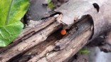 A surprise sprouted inside a water soaked log