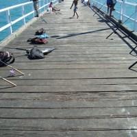 Día 22 a 24(55-57):Hervey Bay y Fraser Island