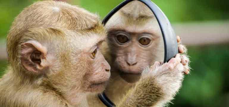 monkeymirror1-min