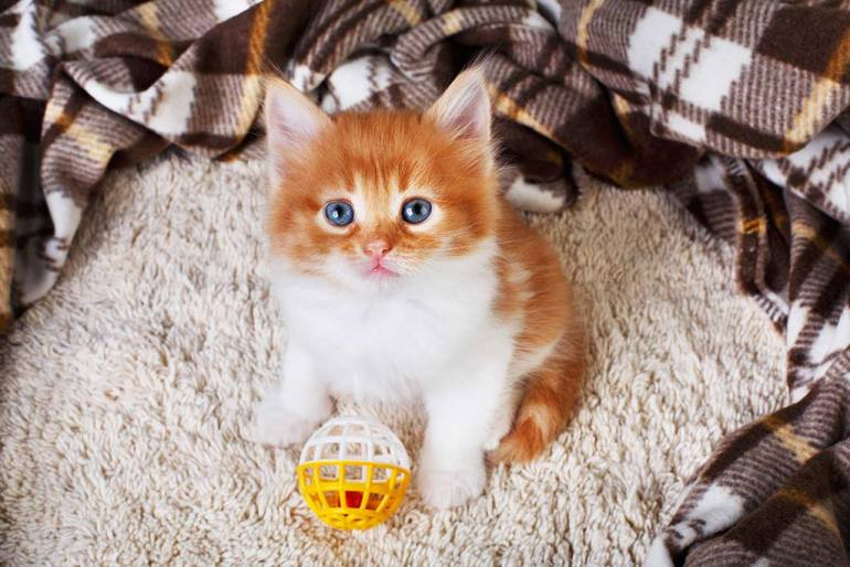 adorable kitten with ball