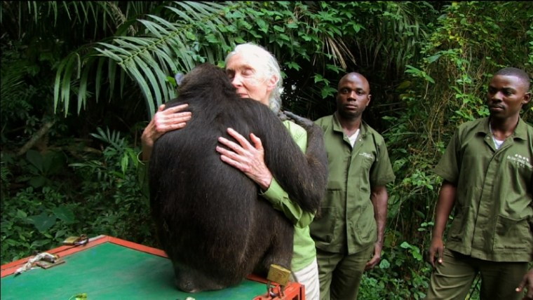 Animal Reunions on PBS Dr. Jane Goodall