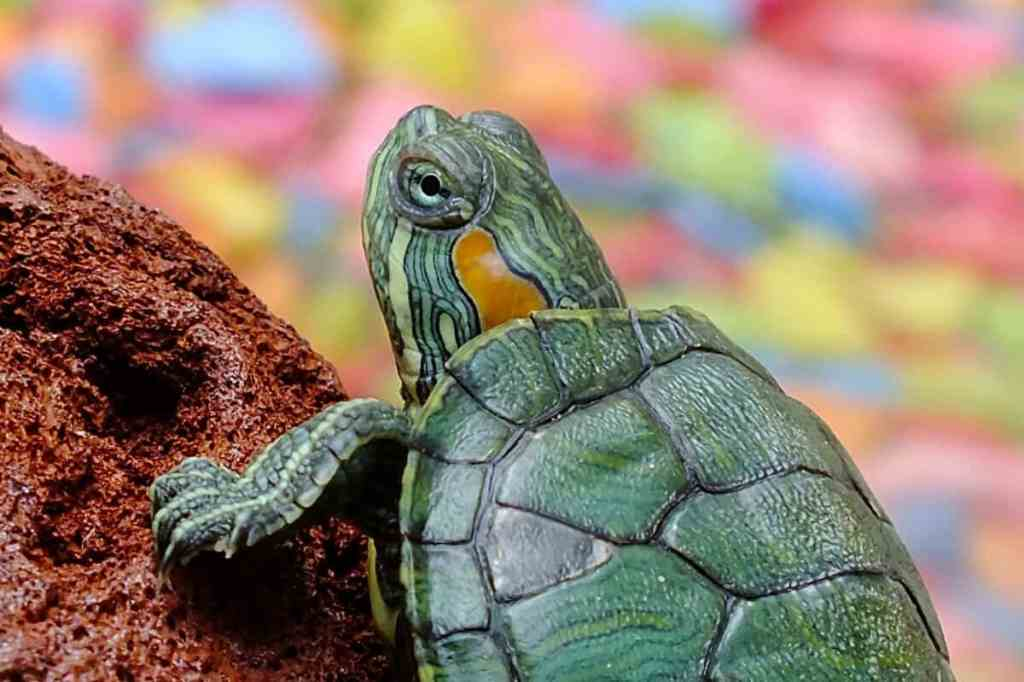 best turtle heat lamps updated 2020