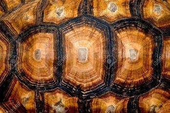 14765788-cierre-de-vista-de-la-textura-hexagonal-de-un-caparaz-n-de-tortuga-foto-de-archivo