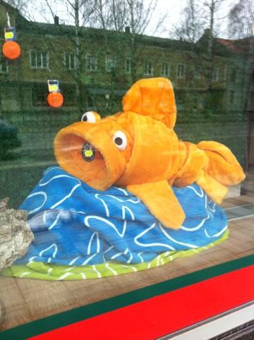 Kattsäng guldfisk