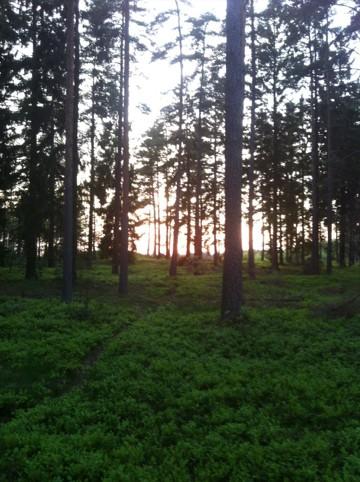 Vy över skogen en kväll