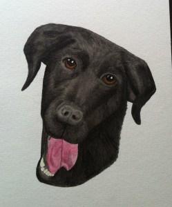 Akvarellmålning föreställande en hund, svärföräldrarnas labradorblandning Kajsa