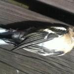 Död fågel, bad och vänner