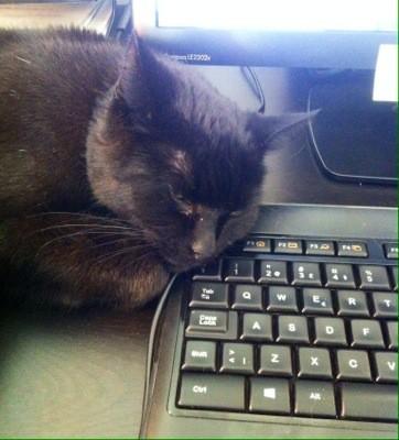 Svart katt på tangentbord