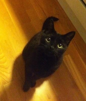 Svart katt ser på när jag äter räkor... Bra sällskap!