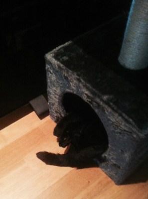 Katt i kattsäng med klätterträd. Tippad katt.