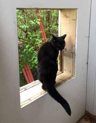 Svart katt tittar ut genom hål i huset