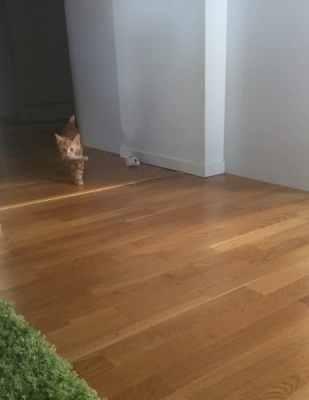 Liten orange kattunge, katt