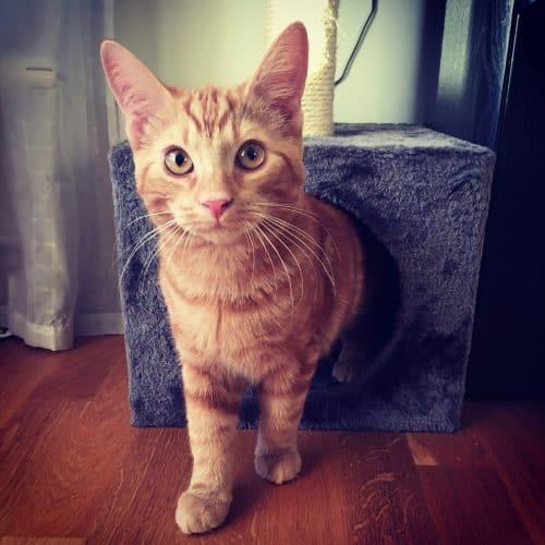 Orange katt, min Fjodor
