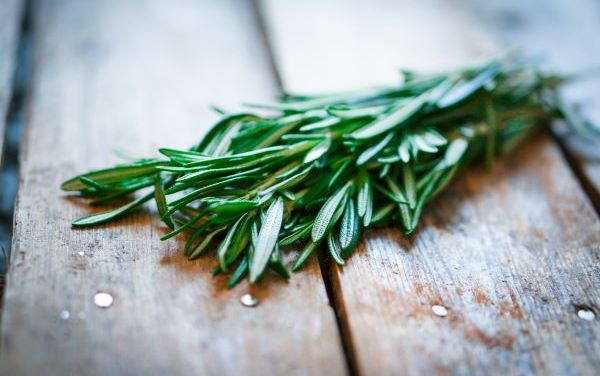 Rosemary Essential Oil – Benefits, Uses and Recipe
