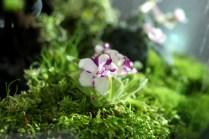 2-25_Flower_Show_Terrarium_62