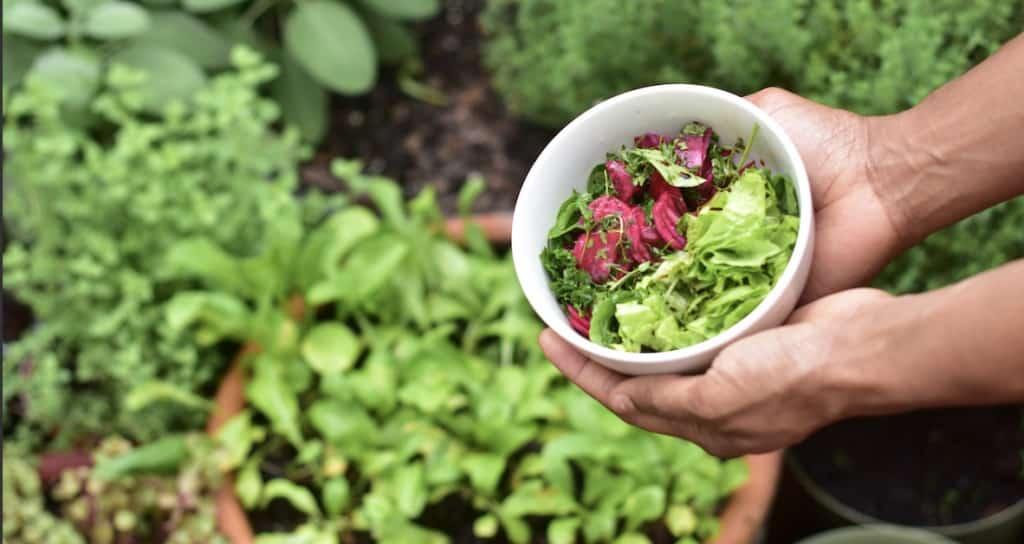 Epargne positive - Culture de salades