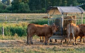 Conversion en bio d'une exploitation agricole