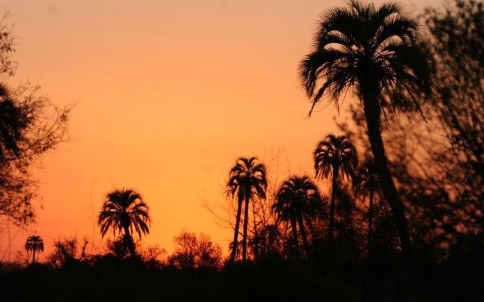 El-Palmar-BONAFEDE