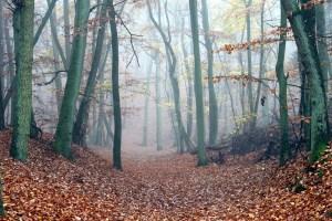 fog-1021008_1920