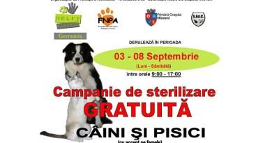 Campanie de sterilizare gratuită a câinilor şi pisicilor în Mioveni