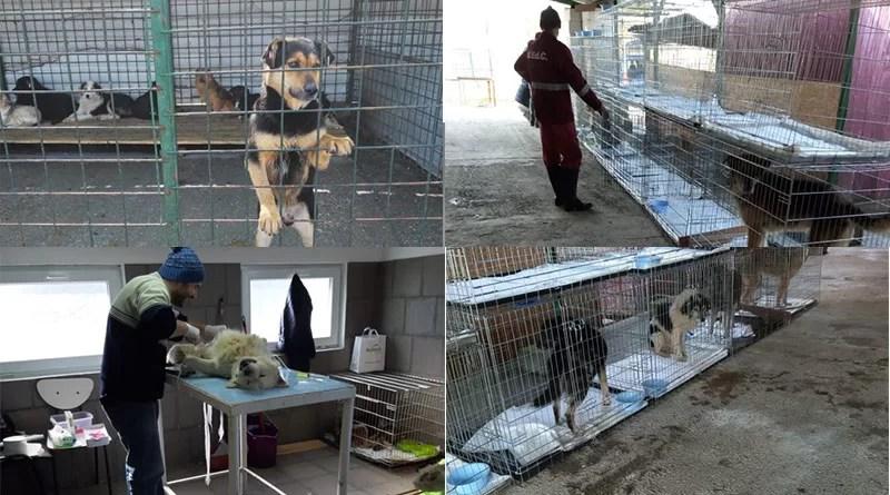 Final de campanie de sterilizare a câinilor pisicilor