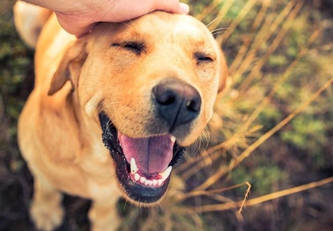 perro sonriendo.jpg