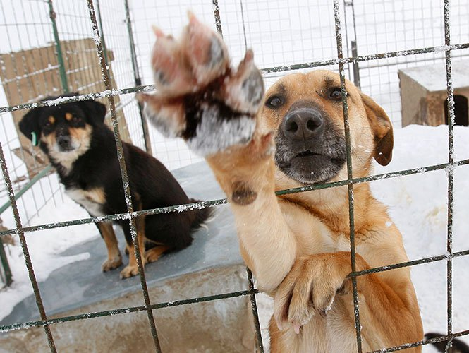 perro honalanda