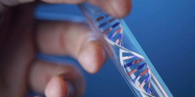 BEBE ADN.jpg