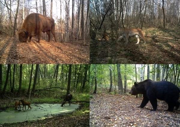 Животные в зоне отчуждения Коллаж Proyecto TREE
