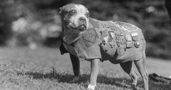 Sergeant Stubby wearing his coat and medals. Stubby served in 17 battles and fought in four major allied offensives during WWI.