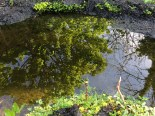 Reflections n the pond