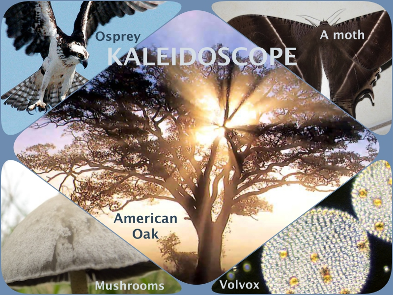 Biodiversity – What is it ?