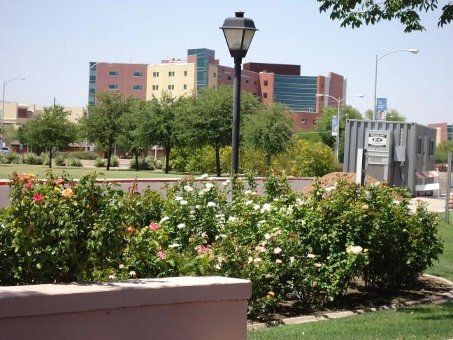 Cardon Children's Hospital in the background.