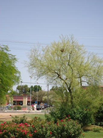 See the nest in the tree?