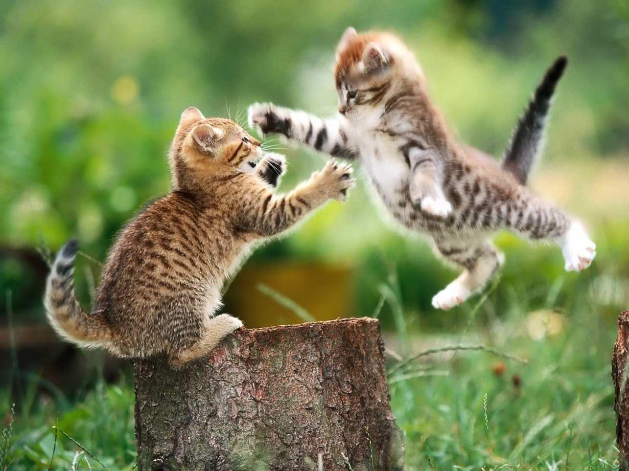 Возраст кошек на человеческом. Правильные методы, как посчитать возраст кошки на человеческий