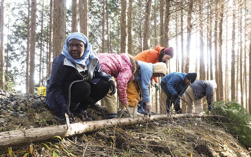 Forest Management: Practical care-taking  of forest resources on campus.