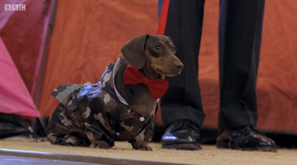 cute dog bow tie