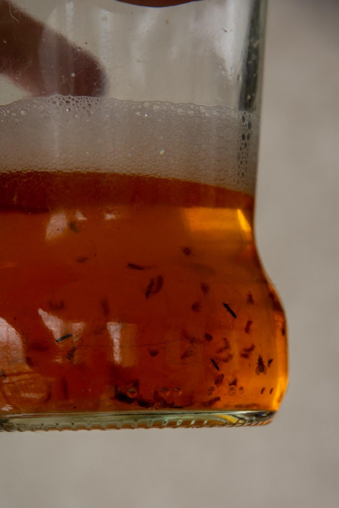 mosca da fruta - como acabar com elas