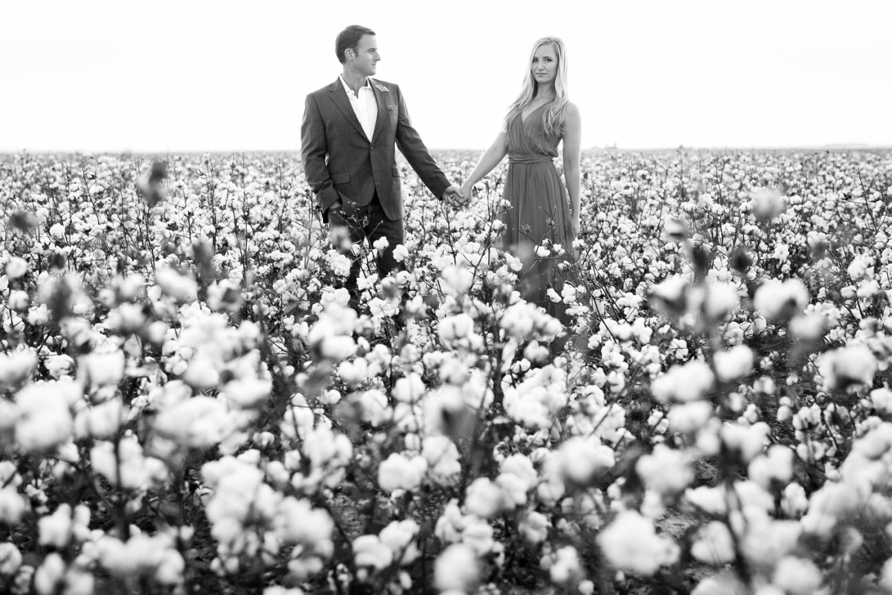 cotton field photos